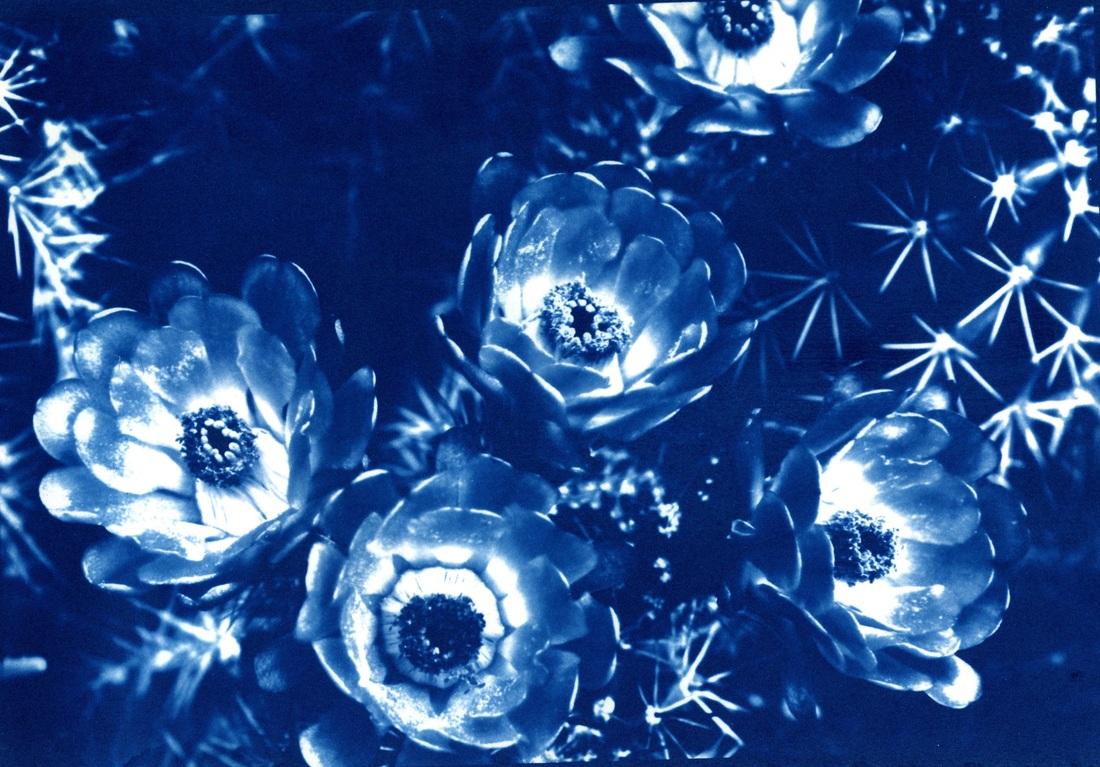 melania brescia photography 4veQoJBg